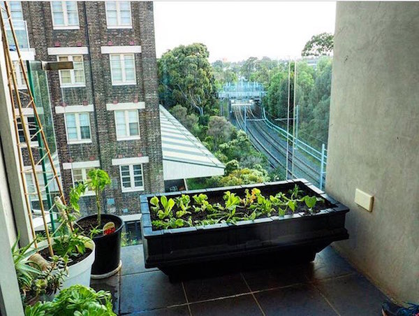 A Raised Vegetable Patch on a Balcony?!
