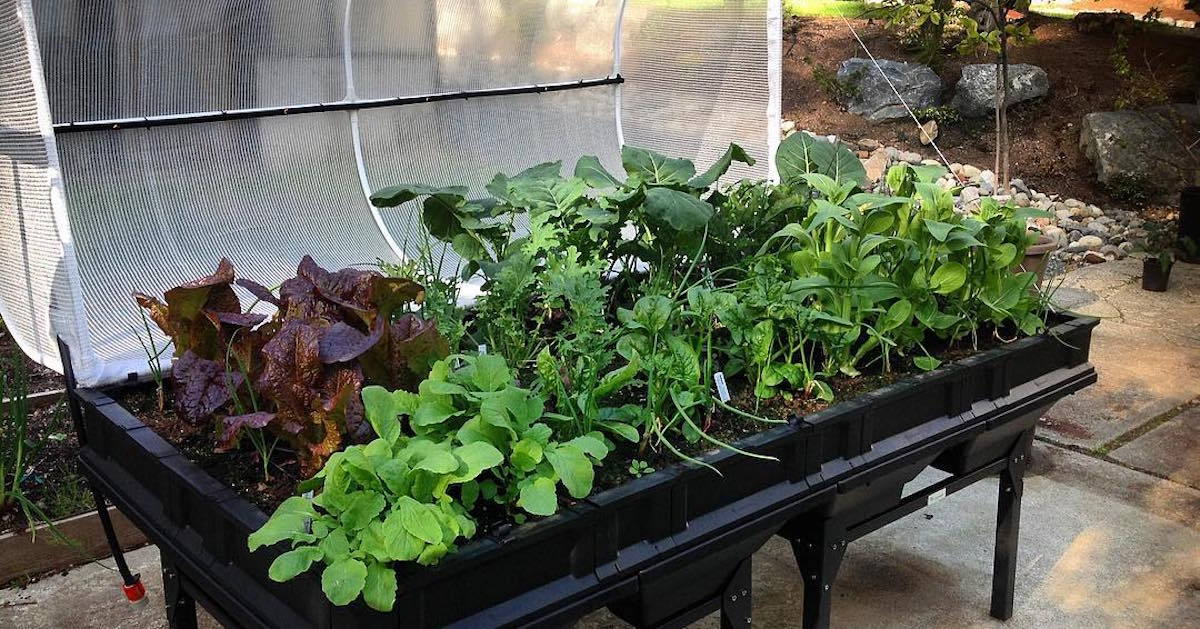 What is the Right Sized Raised Garden Bed For You?
