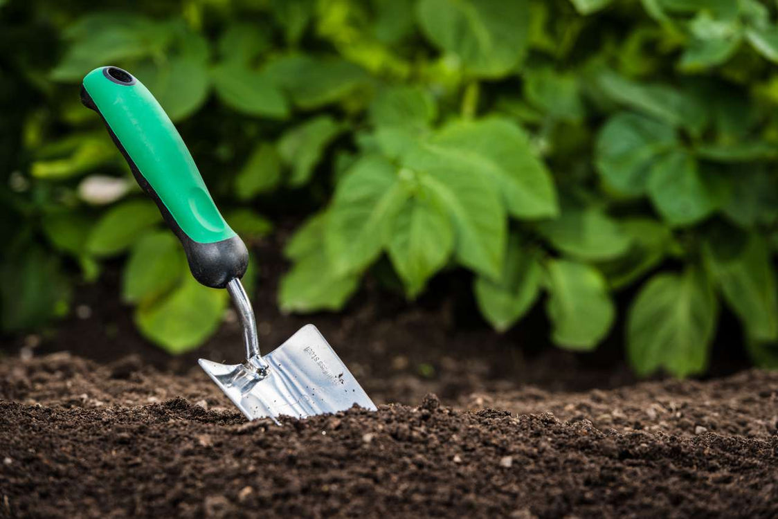 Different Soils Can Affect How You Grow Your Plants and Vegetables