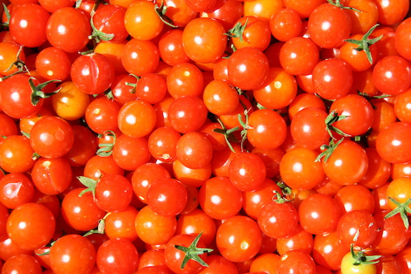 How To Grow Tomatoes in a Raised Garden Bed