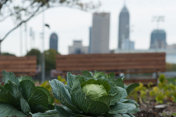 Pain Points for Urban Gardeners