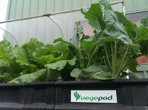 a vegepod raised garden bed base