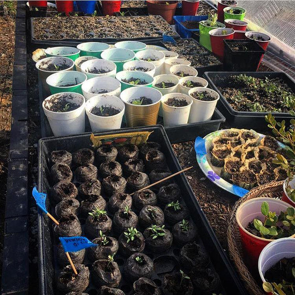 germinating seeds in a raised garden bed