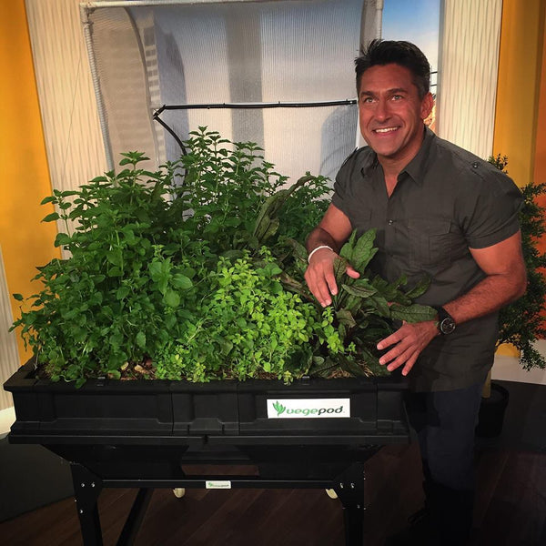 jamie durie vegepod