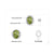 Luxury Peridot Stud Silver Earrings