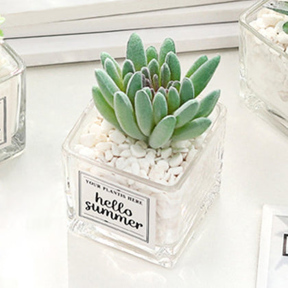 Artificial Succulent Plants Leaf Desktop Decoration Portable Stones Glass Bottle