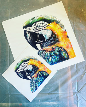 Limited Edition PRINT – PATRICIA THE PARROT