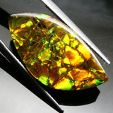 Skyjems Canadian Ammolite