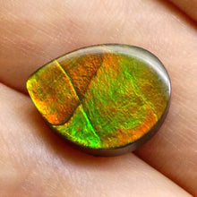 Ammolite 5.43 cts 13.61x10.35x3.76mm Freeform Tablet Black Base with Multicolor Flash  $35