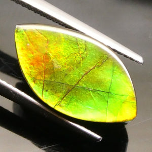 Ammolite 6.28 cts 17.54x9.56x3.78mm Freeform Tablet Black Base with Multicolor Flash  $40
