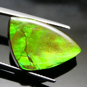 12.14 ct Freeform Tablet  Ammolite