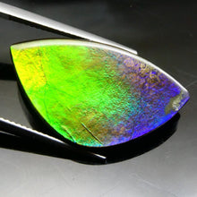 Ammolite 15.22 cts 27.42x15.70x3.92mm Freeform Tablet Black Base with Multicolor Flash  $90
