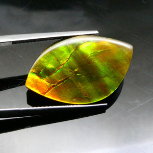 Ammolite 18.21 cts 25.95x15.68x4.22mm Freeform Tablet Black Base with Multicolor Flash  $145