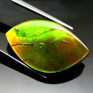 18.21 ct Freeform Tablet Riverbed Pattern Ammolite - Skyjems Wholesale Gemstones