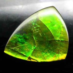 Ammolite 18.34 cts 21.42x18.83x4.10mm Freeform Tablet Black Base with Multicolor Flash  $145