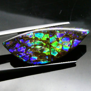Ammolite 18.99 cts 32.70x13.20x4.07mm Freeform Tablet Black Base with Multicolor Flash  $760