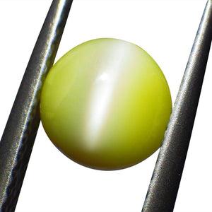 1.37 ct Round Chrysoberyl Cat's Eye - Skyjems Wholesale Gemstones