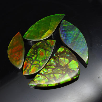 Ammolite 86.35 cts 5 stones Wholesale Lot