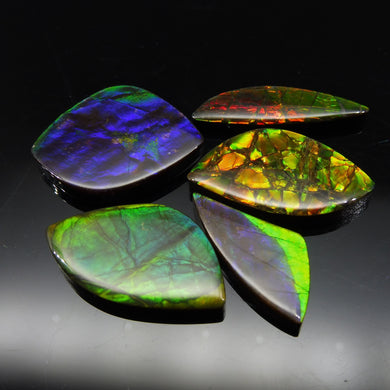 Ammolite 61.69 cts 5 stones Wholesale Lot