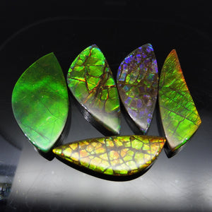 Ammolite 95.57 cts 5 stones Wholesale Lot