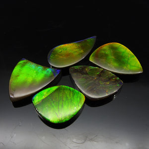 Ammolite 54.17 cts 5 stones Wholesale Lot