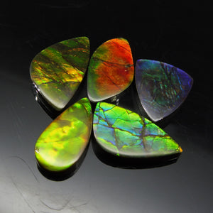 Ammolite 35.5 cts 5 stones Wholesale Lot