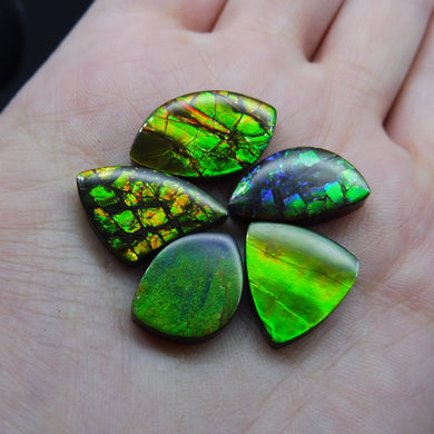 Ammolite 44.51 cts 5 stones Wholesale Lot