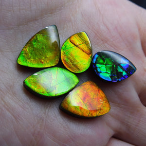 Ammolite 31.72 cts 5 stones Wholesale Lot