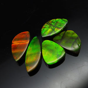 Ammolite 22.22 cts 5 stones Wholesale Lot