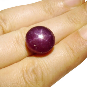 20.84 ct Oval Star Ruby