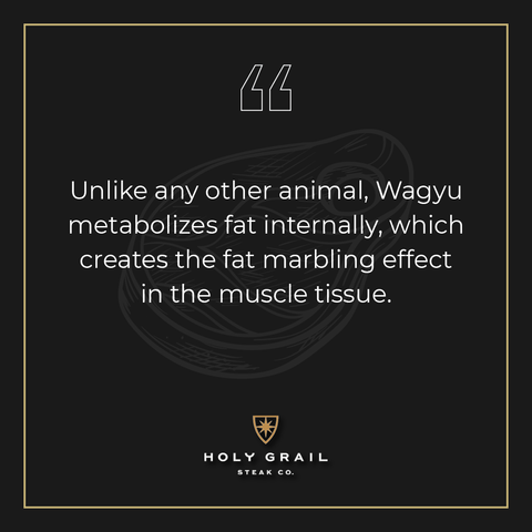 Unlike any other animal, Wagyu metabolizes fat internally, which creates the fat marbling effect in the muscle tissue.