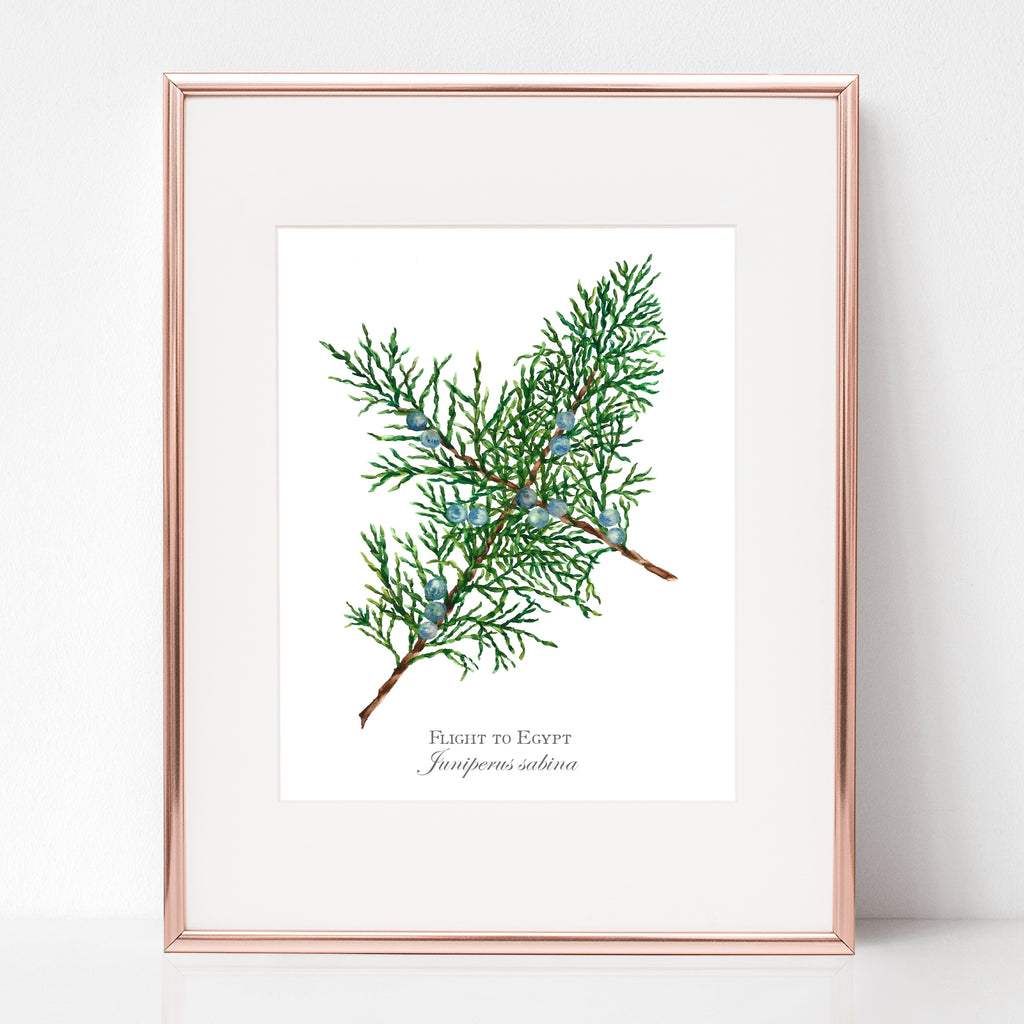THE FLIGHT TO EGYPT, FLIGHT TO EGYPT, Juniperus sabina