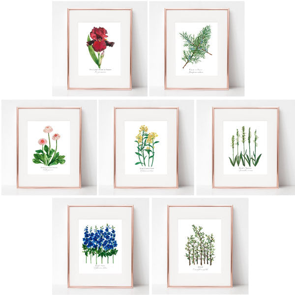 INDIVIDUAL BOTANICAL SEVEN SORROWS SET OF SEVEN