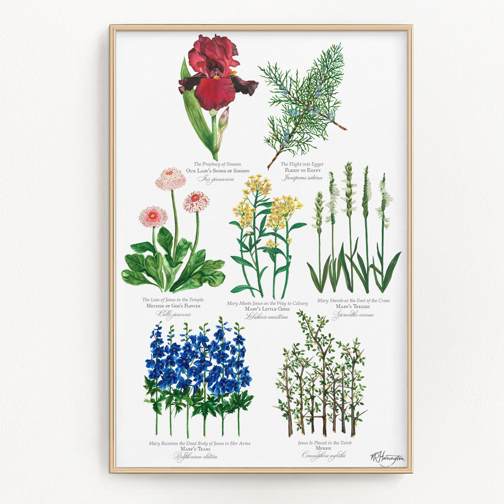 BOTANICAL SEVEN SORROWS OF MARY POSTER - COMPLETE