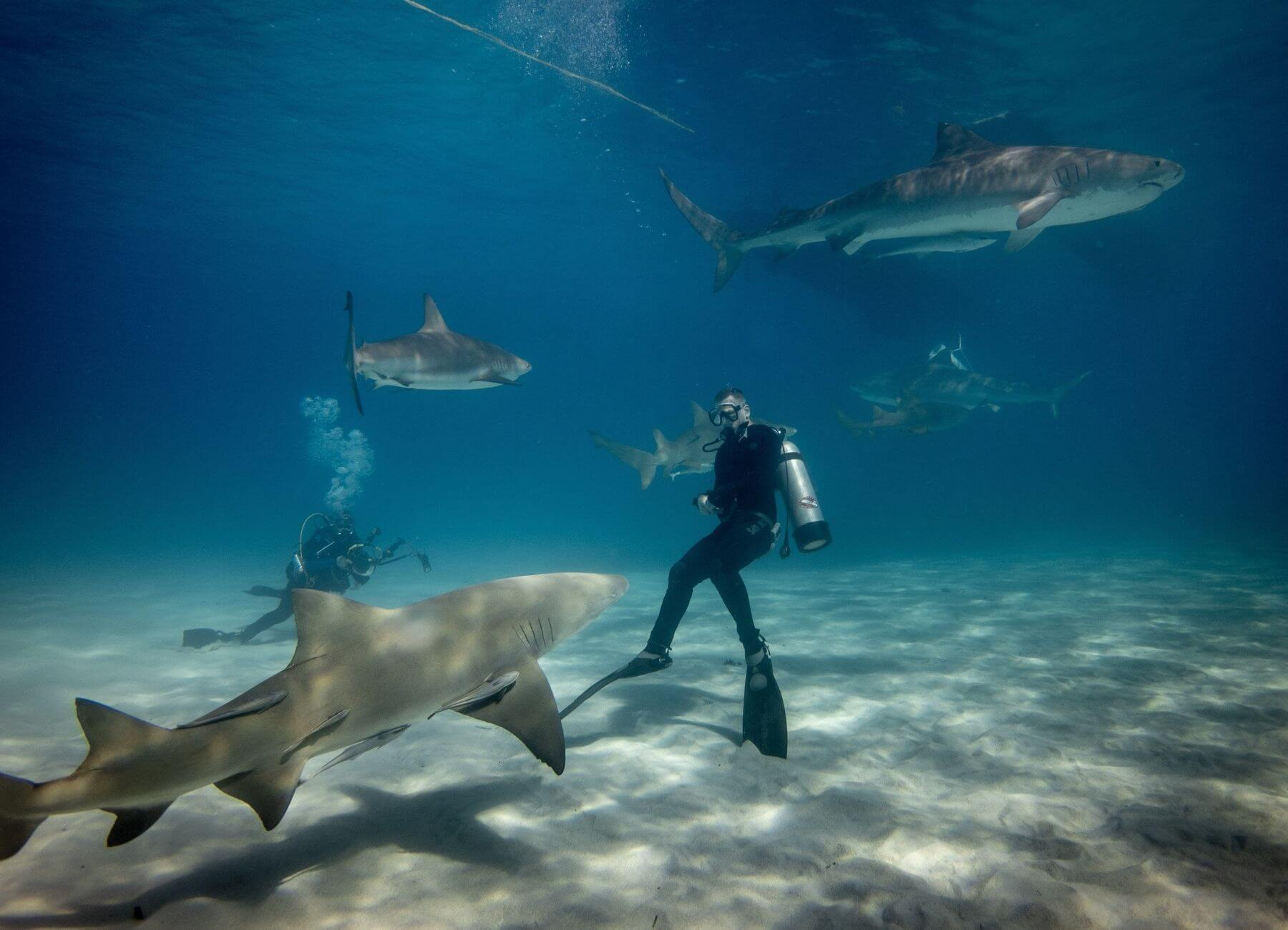 whitetip sharks near coral reef