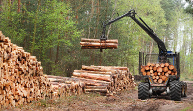 Trump to Increase Logging!  And to Take Water from Endangered Species