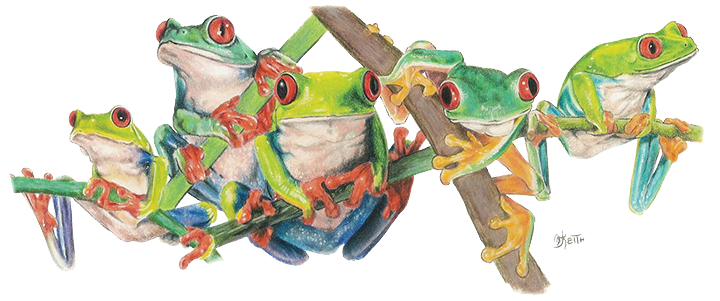 Barbara Keith Artist - Tree Frogs