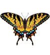 Tiger Swallowtail Butterfly Nature T Shirt