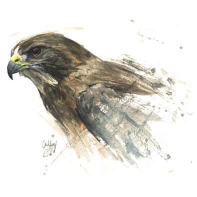 Detail of Swainson's Hawk design, featuring a profile of the head of a Swainson's hawk