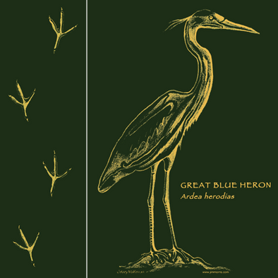 Detail of Heron Tracks design, featuring heron tracks in field guide format on the front and a beautiful monochrome great blue heron with its Latin name on the back