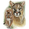 Detail of Cougar wildlife t-shirt, featuring a head shot of a cougar with another cougar stalking towards the viewer in the foreground