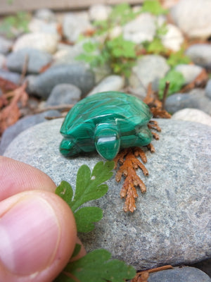 Perfect Pet! Malachite Turtle Carving - Earth Family Crystals
