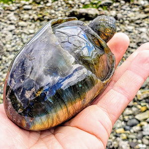 Adorable Large Hatching Turtle Labradorite Carving - Earth Family Crystals