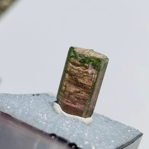 Rare Gemmy Watermelon Tourmaline Point From Brazil in Collectors Box #5 - Earth Family Crystals