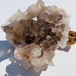 Incredible Rutilated Smoky Quartz Large Druzy Cluster From Brazil