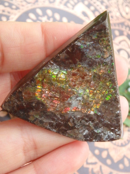 Shimmering Flashes Alberta Ammolite on Matrix Specimen