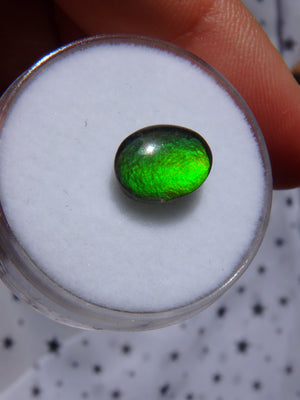 Gorgeous Flashes Quartz Capped  Alberta Ammolite Cabochon For Jewellery Making 3 - Earth Family Crystals