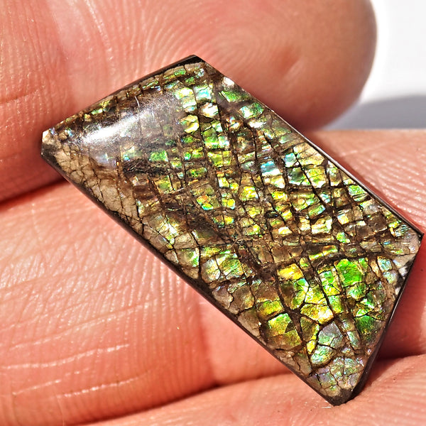 Rare Purple & Blue Flashes Alberta Ammolite Cabochon Ideal for Crafting #2 - Earth Family Crystals