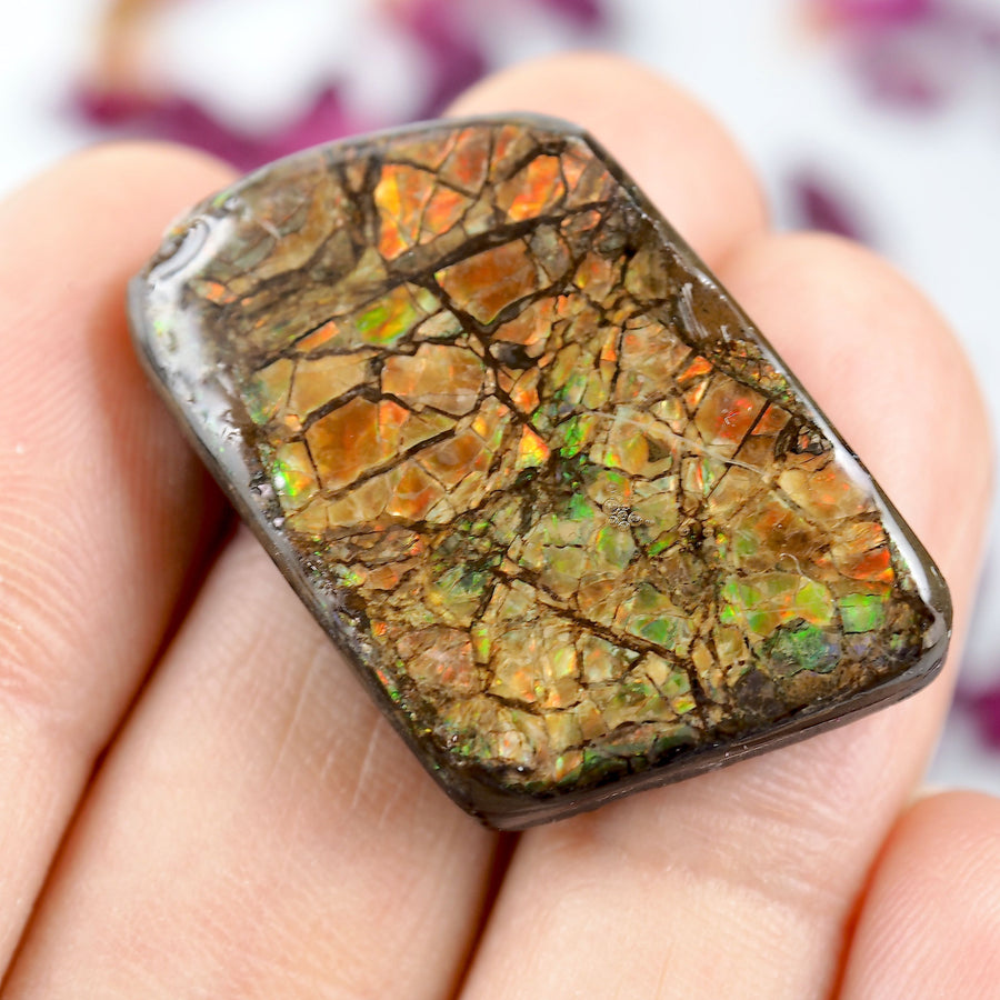 Unique Patterns Alberta Ammolite Free Form Cabochon~Perfect for Crafting!