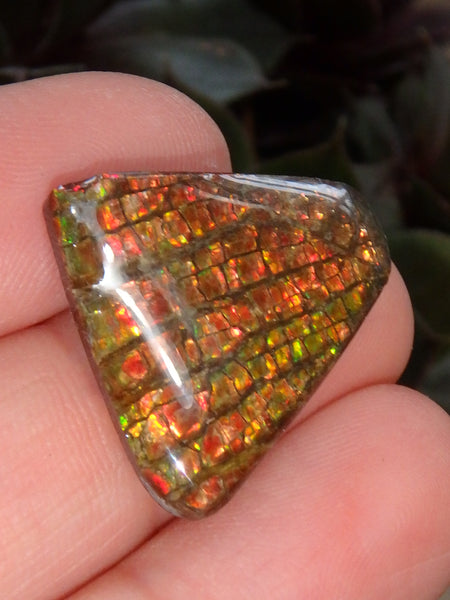 Multi Sparkle Alberta Ammolite Fossil Shell Cabochon Free Form (Ideal for Jewelry Making) 3 - Earth Family Crystals